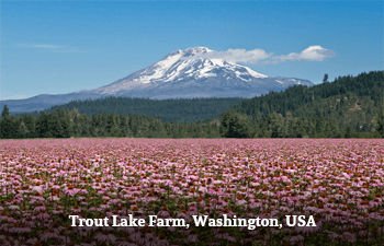 Trout Lake Farm, Washington, USA