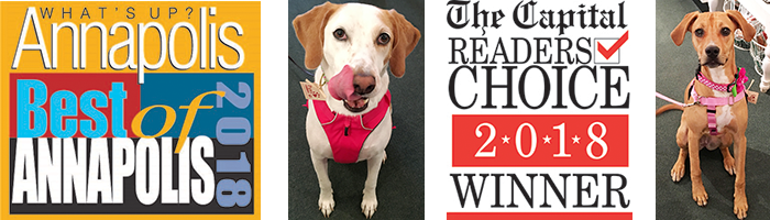 Paws Pet Boutique Voted Best Pet Shop, carrying the Best Pet Products, including Dog Harnesses