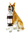 Boxer Dog w/Lantern Solar Light (DB5186A)