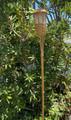 2-Pk Garden Bamboo Torch Solar Light 5 LEDs