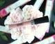 blush nude liquid lip