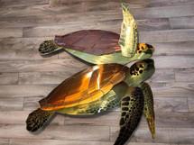 """48"""" Sea Turtle"""