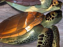 """60"""" Sea Turtle"""