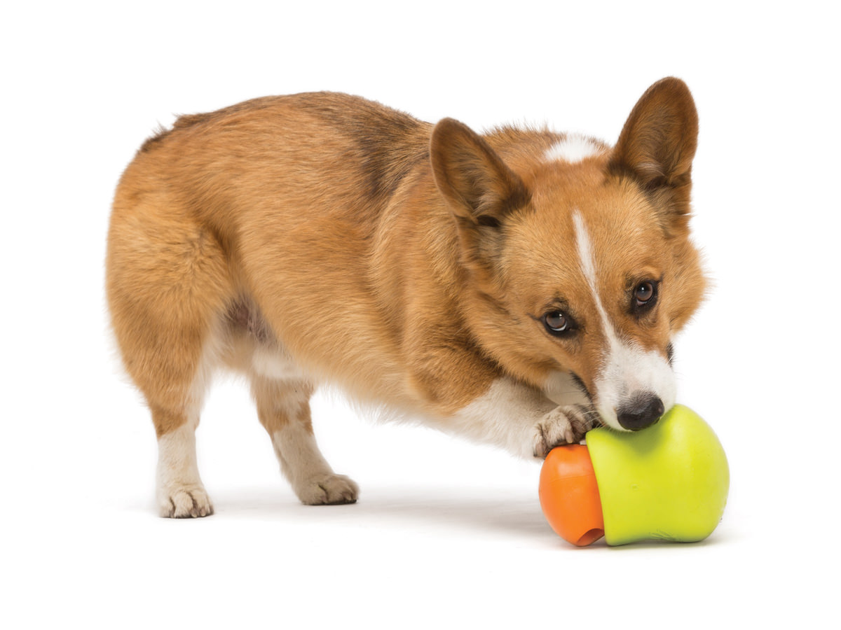 toppl-dog-toy-corgy.jpg