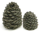 Set of 4 Decorative Charred Pine Cones