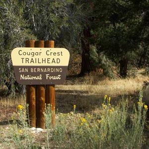 cougar-crest-12.jpg
