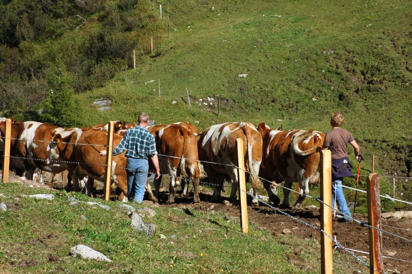 family-farmer-organic-grass-fed-beef.jpg