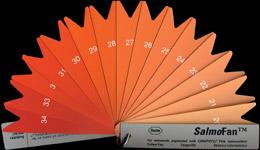 Salmon Color Fan