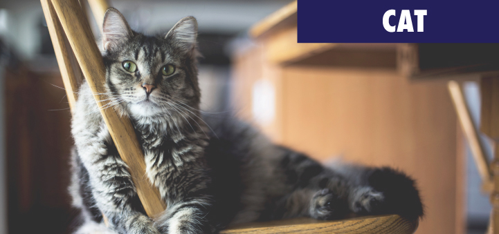 3.-cat-category-home-page.jpg