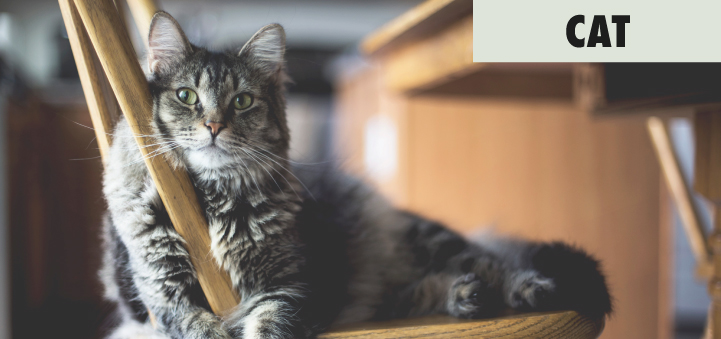 cat-category-home-page.jpg