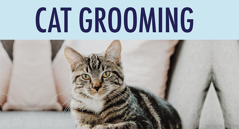 cat-grooming-1.jpg