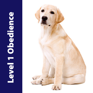 Level 1 Obedience