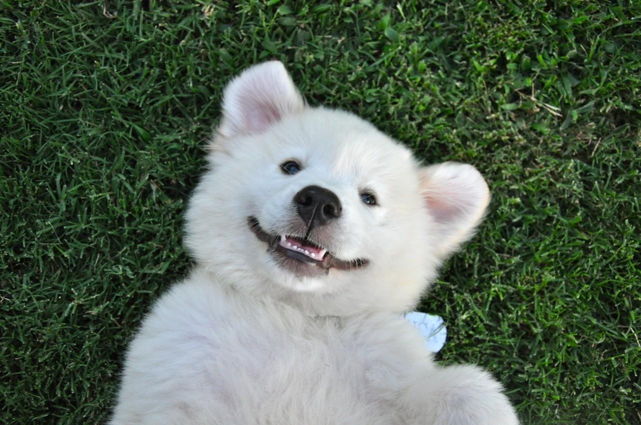happydog1.jpg