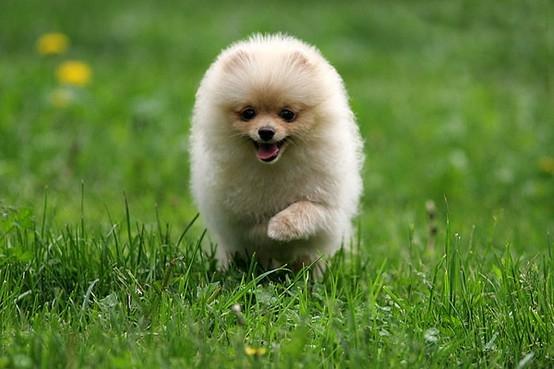 happydog3.jpg