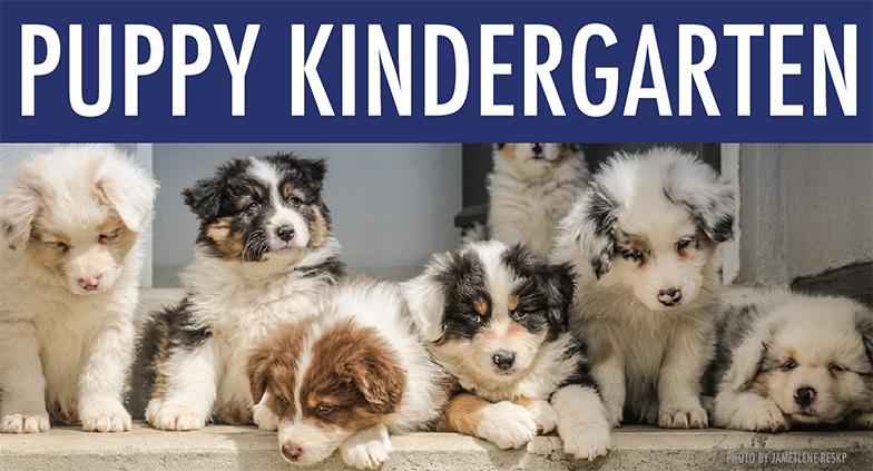 puppy-kindergarden.jpg