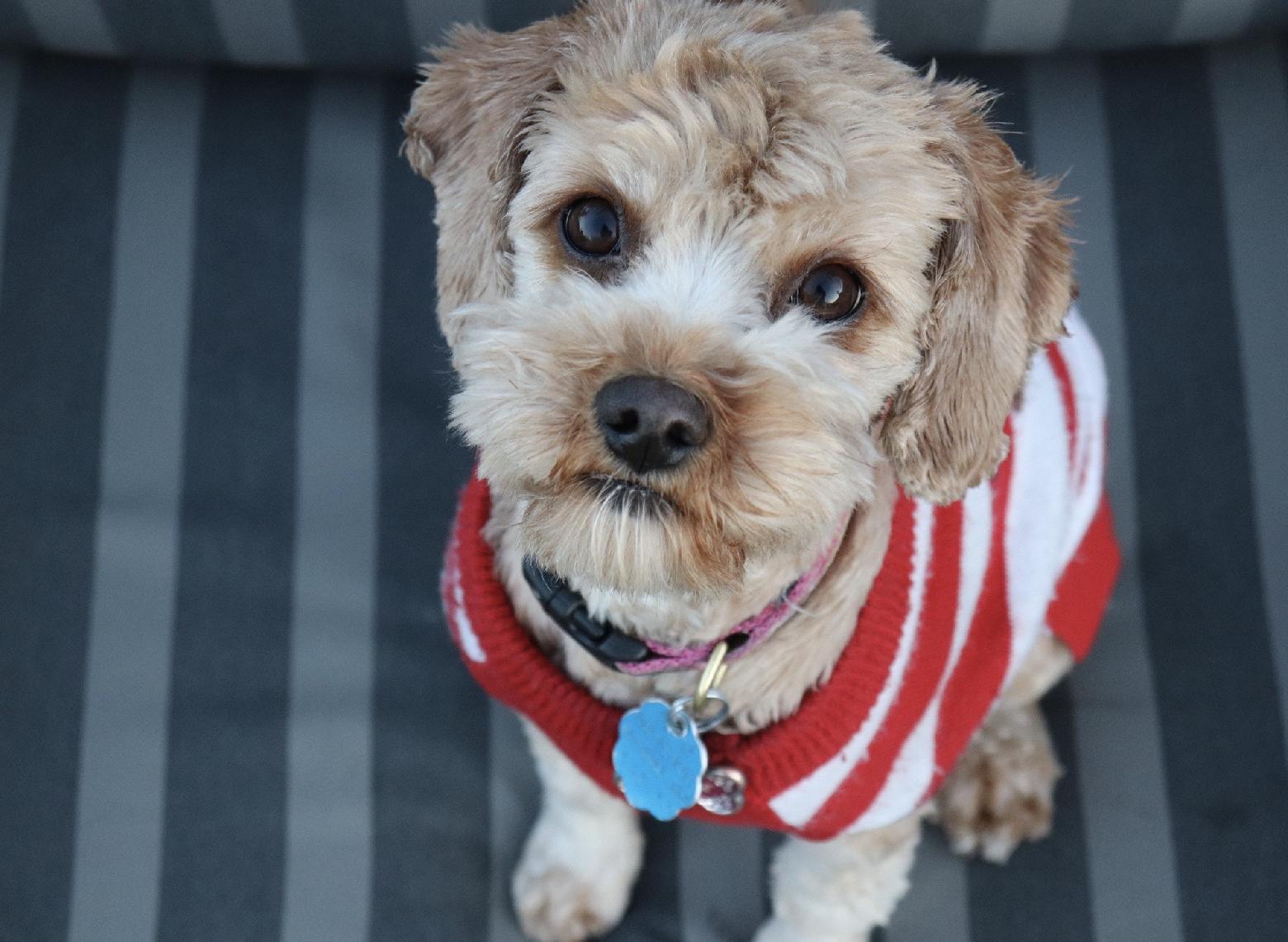 Dog Coats Jackets Sweaters Chaar