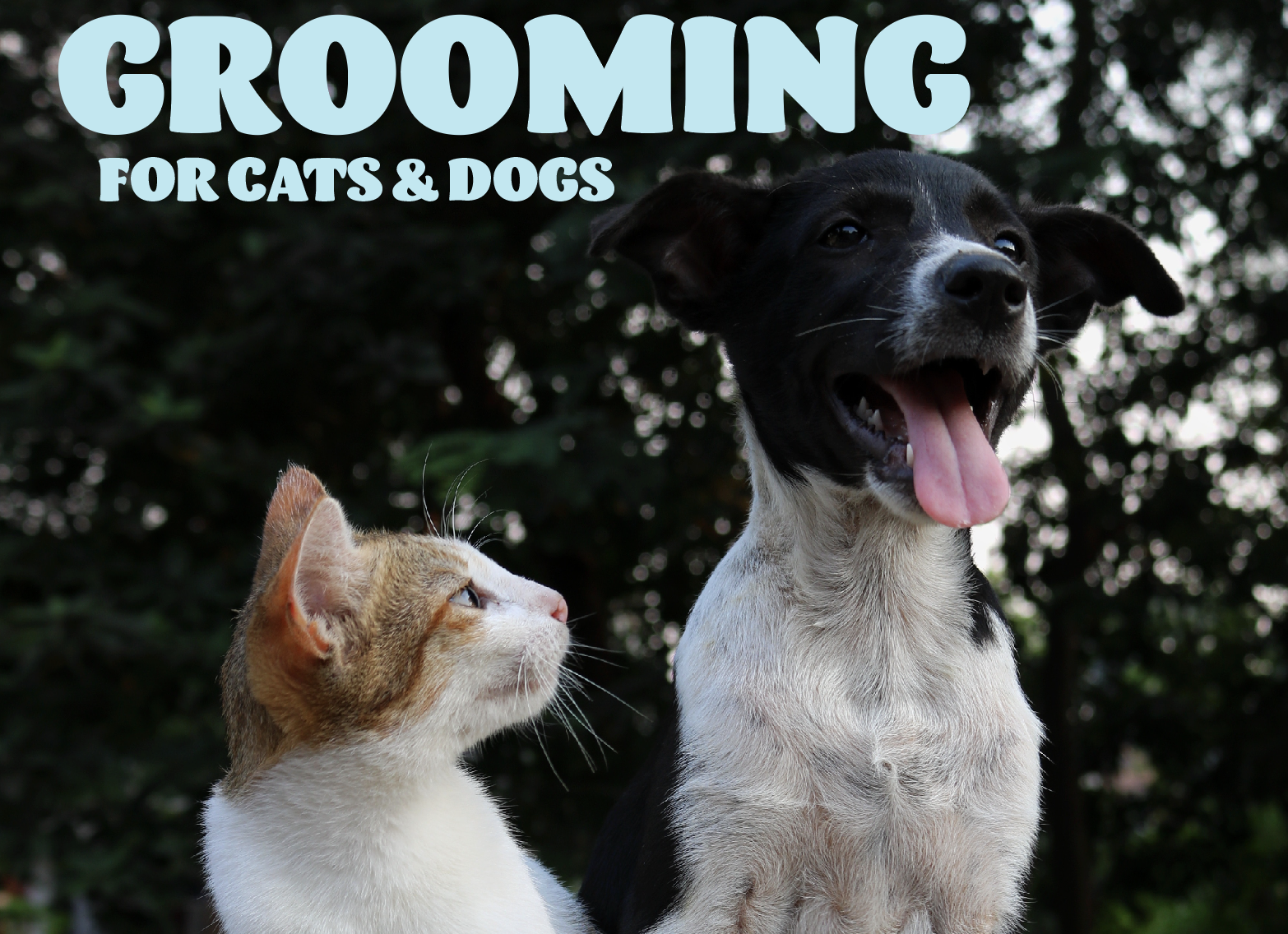 Grooming for Cats and Dogs