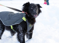 RC Pets Black Nimbus Puffer Coat