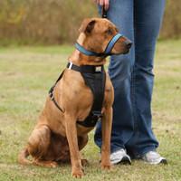 Kurgo No-Pull Head Halter for Dogs