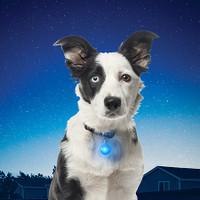 SpotLit LED Carabiner Collar Light