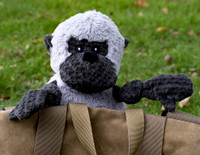 Hugglehounds Plush Durable Corduroy Gorilla Knottie