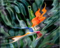Liquid Fantasy Bird of Paradise by Artist McKenzie