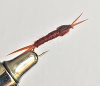 Stonefly - Brown 2pk.