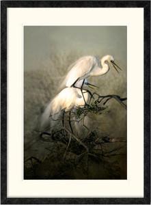 Nesting Great Egrets | Charlene deJori | Ebony frame