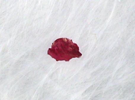 bloodchipfeatherss2.jpg