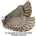 Eagle Wings 1894