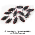 Fake Roach Prank | Fake Cockroaches |  12PK WS9026D