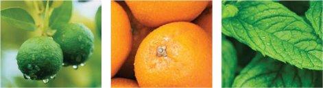 citrusmint.jpg