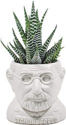 Freud Planter