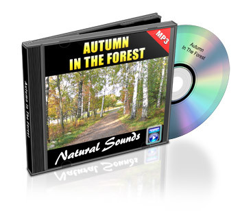 Autumn in the Forest Soundtrack