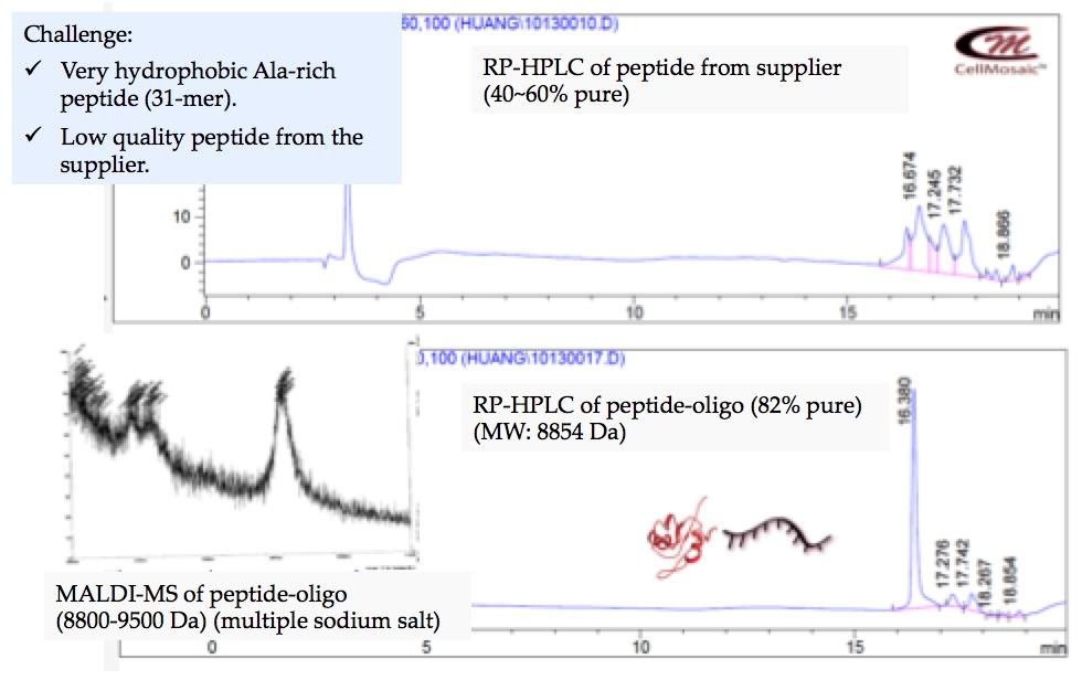 bc0010-example-2-oligo-peptide-.jpg