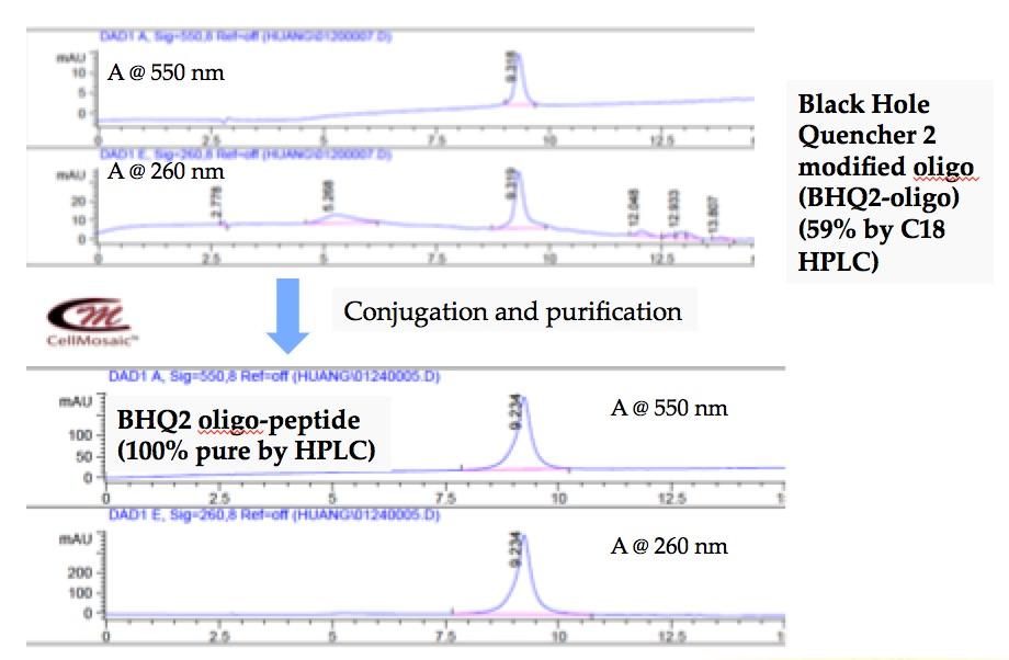 bc0010-example-oligo-peptide-.jpg