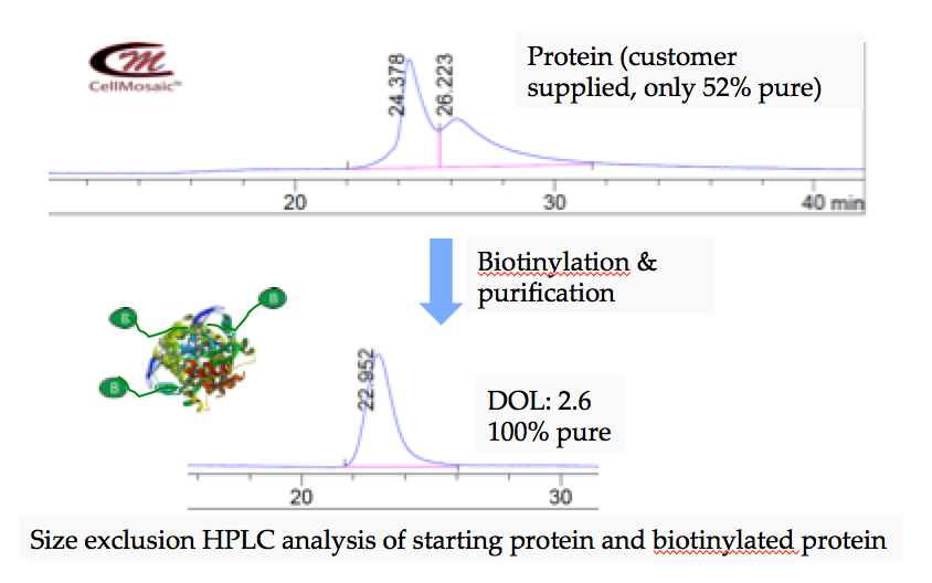 bl002-protein-biotinylation.jpg