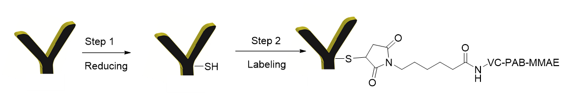 f-ab-2-and-mmae-labeling-scheme.png