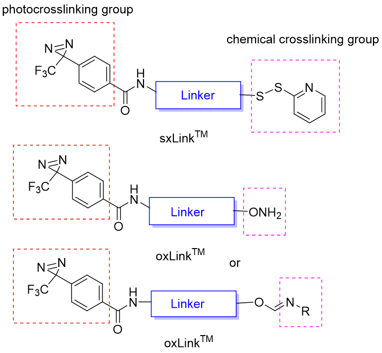 figure-1-general-structure-of-oxlink-and-sxlink.png