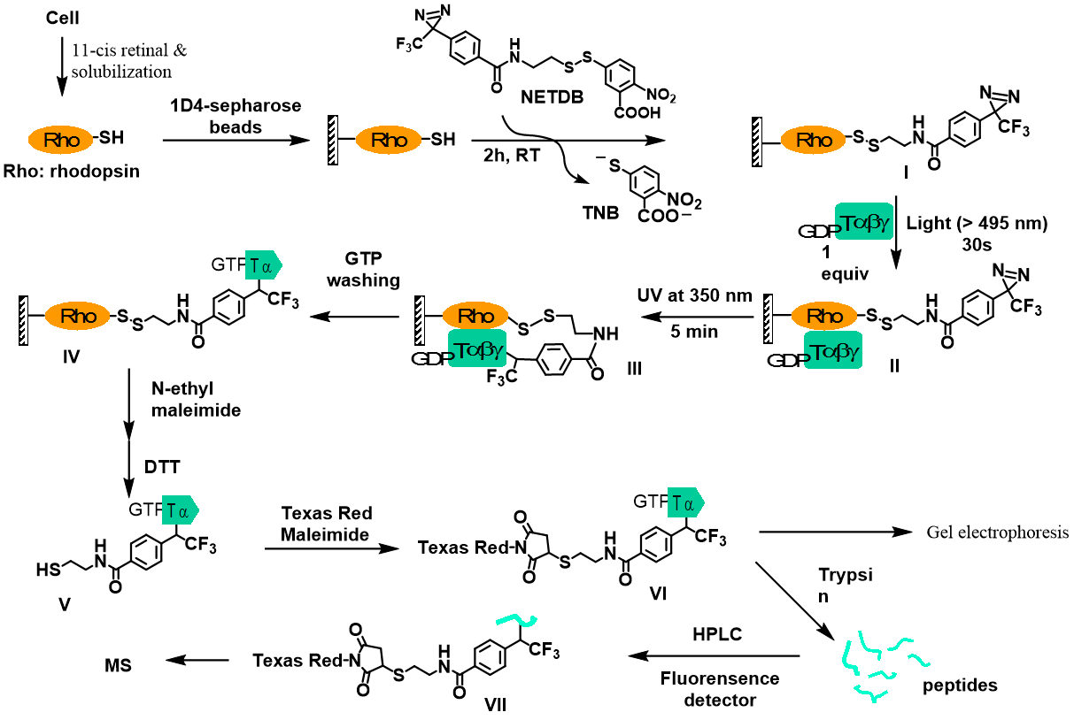 protein-protein-interaction-example.png
