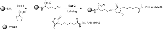 scheme-protein-mmae-conjuagtion-kit.png