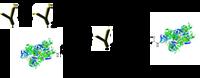 HRP antibody conjugation scheme