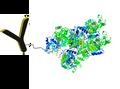 HRP antibody conjugate