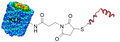 Peptide KLH conjugates