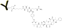 Chemical Structure of Antibody MMAE Conjugate