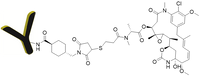 CM11410: Antibody Mertansine (DM1) Conjugates