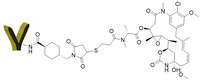 Product F(ab')2 DM1 conjugate CM11419