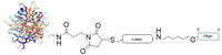 Chemical Structure of Streptavidin Oligo Conjugate