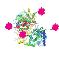 Protein/Enzyme/Antibody Labeling through Surface Amine