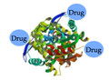 Protein-Drug Conjugate